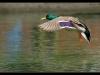 ptacek155