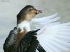 ptacek156