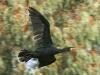 ptacek158