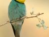 ptacek163