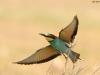 ptacek165