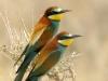 ptacek168