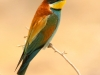 ptacek170