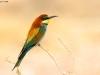 ptacek171
