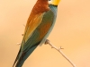 ptacek174