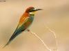 ptacek175