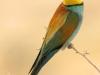 ptacek176