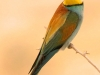 ptacek182
