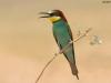 ptacek185