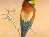 ptacek191