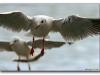 ptacek198