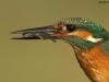 ptacek208