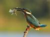 ptacek22