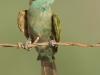 ptacek271
