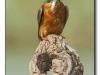 ptacek295
