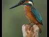 ptacek339