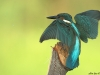 ptacek353