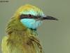 ptacek401