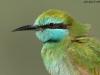 ptacek403