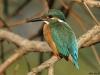 ptacek503
