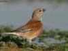 ptacek650