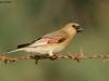 ptacek651