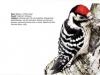 ptaci191