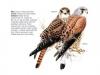 ptaci207