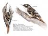 ptaci218