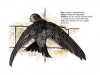 ptaci226