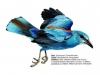 ptaci232