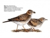 ptaci238