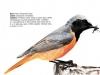 ptaci240