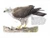 ptaci245