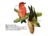 ptaci248