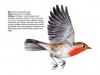 ptaci255