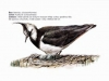 ptaci265