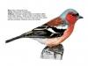 ptaci274