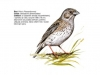 ptaci284