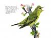 ptaci286