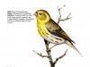 ptaci289