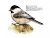 ptaci291