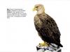ptaci292