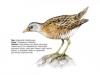ptaci295