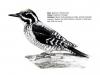 ptaci296