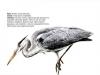 ptaci297