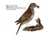 ptaci298