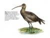 ptaci299