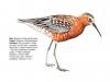 ptaci303