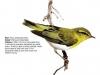 ptaci305